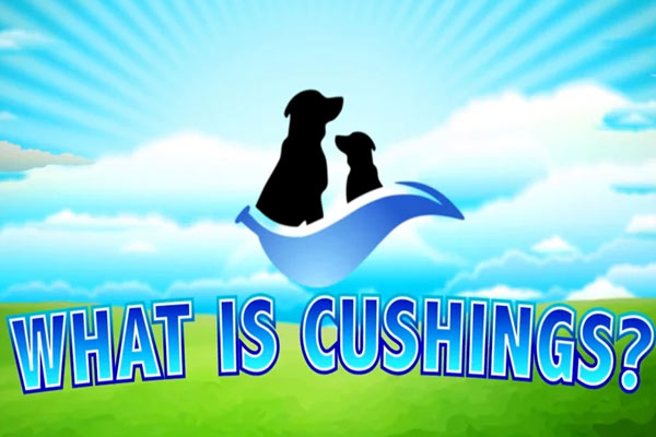 What Is Cushing's